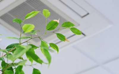 Quick Facts About Indoor Air Quality You Should Know